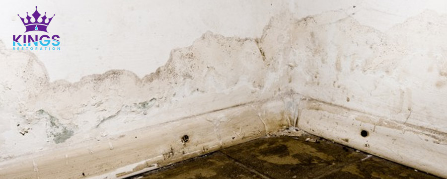 Best Way to Get Rid of Mold