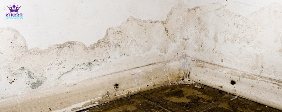 Mold-Cause-Structural-Damage